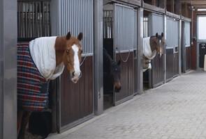 Miele professionele automaten voor Paardensport